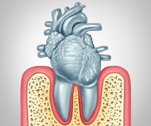 Dental care or oral health and heart disease hygiene concept caused by tooth plaque and gum infection due to mouth bacteria damaging the valves as teeth shaped as a cardiovascular organ as a 3D illustration.
